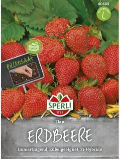Erdbeere Elan
