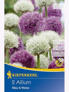 Blühende Partner Allium Blau & Weiß
