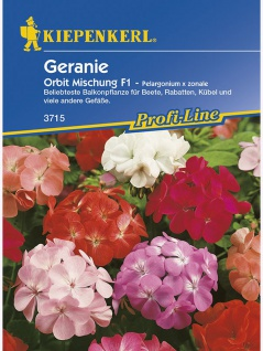 Pelargonium x zonale Geranien Mischung - Vorschau 1