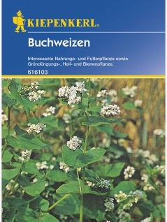 Buchweizen Gründünger Portion , Grundpreis: 0.06 € pro 1 g