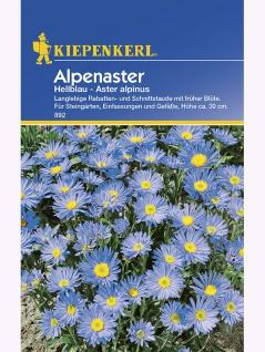 Aster alpinus Alpenaster hellblau
