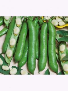 Puffbohnen Grosse Bohnen Frühe Weißkeimige 1kg