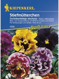 Viola x wittrockiana Stiefmütterchen Orchideenblütige Mischung