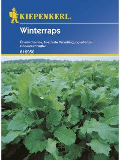 Winterraps Gründünger Portion , Grundpreis: 0.03 € pro 1 g