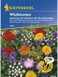 Wildblumen mit Kräutern für die Naturwiese Mischung ein- und mehrjährig