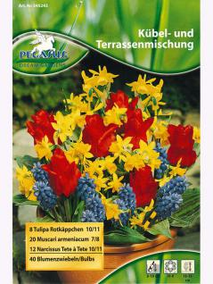 Pegasus Kübel- und Terrassenmischung Blumenzwiebeln-Mischung (40 Zwiebeln)