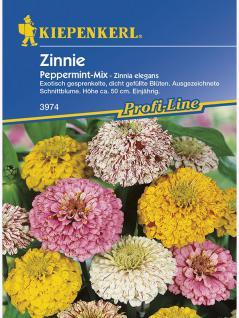 Zinnia elegans Zinnie Peppermint Mischung