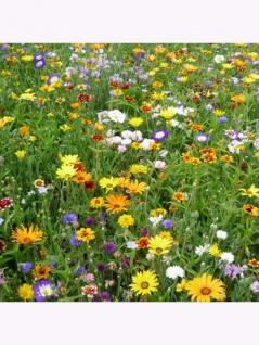 Landblumenmischung ein- und mehrjährige Mischung