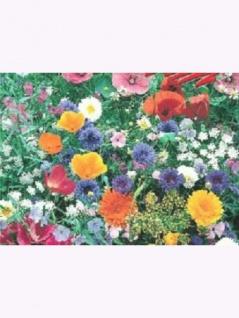 Blumenmischung Wiesenblumen und Kräuter 1kg