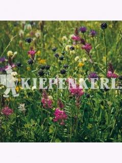 Blumenwiesen-Mischung nach LÖBF Kleve-Kellen 1kg - Vorschau