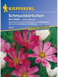 Cosmos bipinnatus Schmuckkörbchen Sea Shells Mischung - Vorschau 1