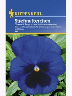 Viola Stiefmütterchen blau mit Auge - Vorschau 1
