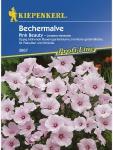 Lavatera Bechermalve Pink Beauty rosa