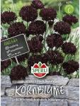 Kornblume SPERLING´s Black Beauty