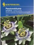 Passiflora caerulea Passionsblume