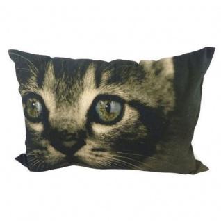 Kissen Kätzchen Augen