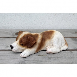Jack Russell Welpe schlafend