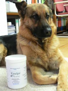 Kieselgur und Zink für Hunde