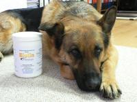 Biotin für Hunde