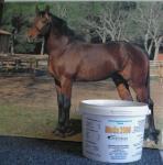 Biotin für Pferde