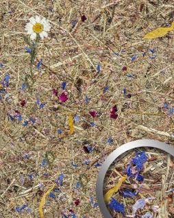 Wandverkleidung Natur Dekor WallFace AL-11005 ALPINE POTPOURRI selbstklebende Tapete strukturiert mit echten unbehandelten alpinen Blumen und Gräsern matt braun blau pink 4, 026 m2