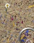 Wandverkleidung Natur Dekor WallFace AL-11005-SA ALPINE POTPOURRI selbstklebende Tapete strukturiert mit echten unbehandelten alpinen Blumen und Gräsern matt braun blau pink 4, 026 m2