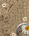 Wandverkleidung Natur Dekor WallFace AL-11004-SA ALPINE WHITE DAISY selbstklebende Tapete strukturiert mit echten unbehandelten alpinen Blumen und Gräsern matt braun weiß 4, 026 m2