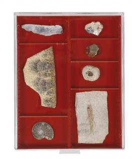 Lindner 2462 Sammelbox Rauchglas mit 2 Facheinteilungen und variablen Stegen 105 x 280 mm