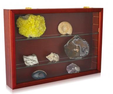 "SAFE 5927 Mahagonifarbende Holzvitrine "" MAXI "" 620x420x100 mm 4 Ebenen Für Mineralien & Fossilien"