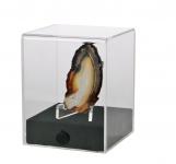 """SAFE 5286 Acrylglas Präsentations Vitrinenwürfel Deko Aufsteller Würfel Universal """" CUBE S """" Glasklar 80 x 80 x 100 mm Für Mineralien - Fossilien - Bernstein - Schnecken - Muscheln - Kristalle"""