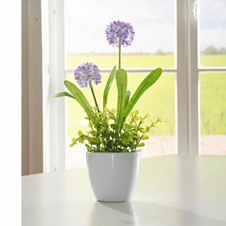 "Topf Pflanze "" Allium"", flieder, 27 cm hoch, Keramik Übertopf, Kunst Büro Blume"