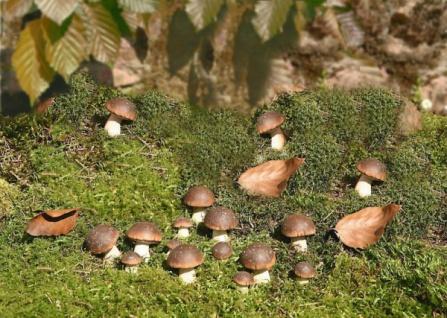 Herbstdeko g nstig sicher kaufen bei yatego for Terracotta gartendeko