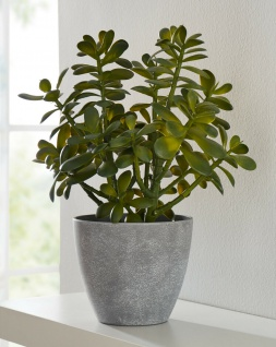 Kunst Pflanze Geldbaum 40 cm künstlicher Zier Deko Plastik Baum täuschend echt