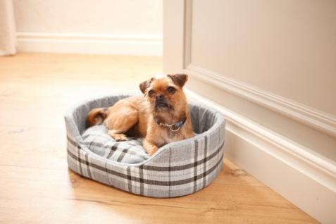 Tier Bett 'Britisch Style? Sofa Liegefläche Liegedecke Hunde Katze Schlafplatz