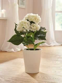 künstliche Hortensie creme weiß im Topf, 50 cm, Kunst Blume Busch Zier Pflanze