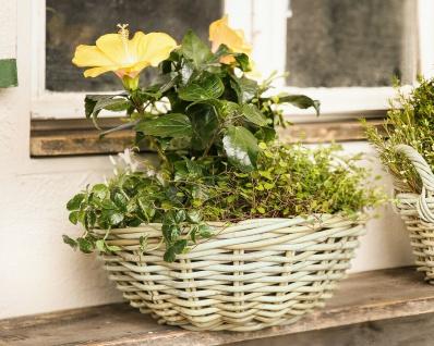 """Pflanz Schale """" Koboo Grey"""" aus Rattan, rund, grau, Blumen Topf Kübel Korb Garten"""