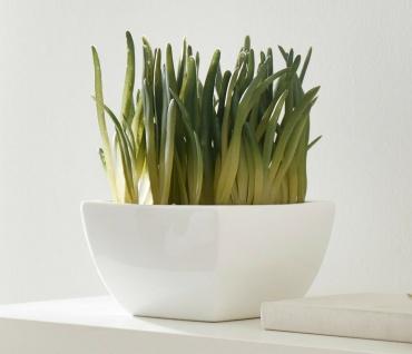 "Kunst Deko Pflanze "" Bergeranthus"" 20 cm hohe Zierpflanze, täuschend echt, unecht"
