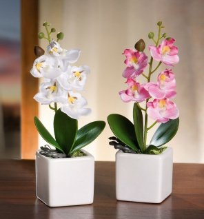 2x Deko Orchidee rosa + weiß im Porzellan Topf, Kunst Pflanze Büro Zier Blume