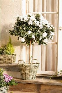 """Pflanz Korb """" Rustikal"""" aus Rattan, rund, grau, Blumen Topf Kübel Kasten Garten"""