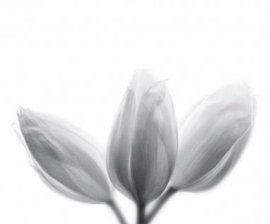 """Küchen Rückwand """" Blüten"""" aus Glas, 60x50 Herd Spüle Spritz Schutz Platte Bild"""