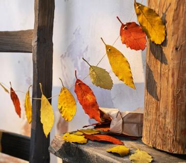 "Herbst Deko "" Blätter"" leuchtende Farben, echt Buche getrocknet, Laub Tisch Streu"