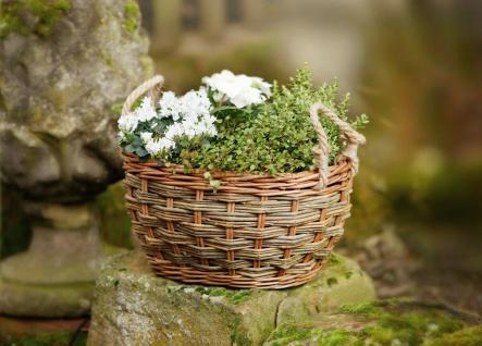 """Pflanz Korb """" Natur"""" aus Weide, braun, oval, Blumen Pflanzen Topf Kübel Garten"""
