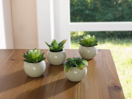 4 er Set Mini Sukkulente im Keramik Topf, Zimmer Büro Deko Kunst Pflanze Blume