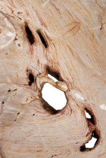 Casa Padrino Luxus Art Deco Designer Couchtisch aus versteinertem Holz - Wohnzimmer Salon Tisch - Limited Edition - Vorschau 4