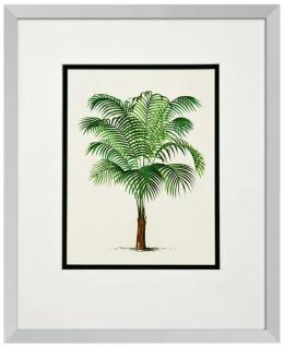 Casa Padrino Bilder / Kunstdruck 4er Set Palmen Mehrfarbig 43 x H. 53 cm - Luxus Deko - Vorschau 4