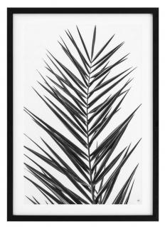 Casa Padrino Luxus Druck Set Palmenblätter 74, 5 x H. 104, 5 cm - Luxus Bilder & Accessoires - Vorschau 3
