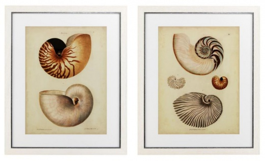 Casa Padrino Bilder / Kunstdruck Set Antiker Schneckenhäuser Mehrfarbig 68 x H. 83 cm - Luxus Deko