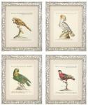 Casa Padrino Deko Bilder Set Papageien 49 x H. 59 cm - Luxus Wohnzimmer Deko