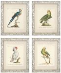 Casa Padrino Deko Bilder 4er Set Papageien 49 x H. 59 cm - Luxus Wohnzimmer Deko