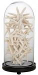 Casa Padrino Designer Glocke aus Glas und Kiefernholz 24 x H. 60 cm - Luxus Dekoration